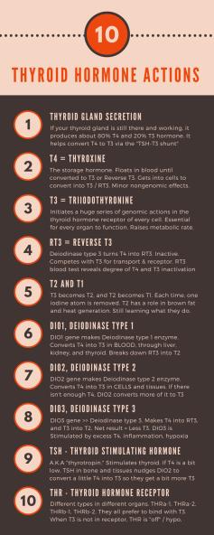 Thyroid-hormone-actions